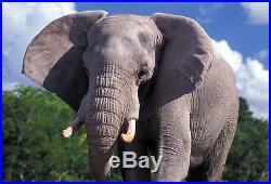 2013 Somalia Elephant 1 Ounce Pure Silver Colorized Elephant Coin Series