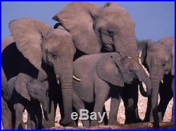 2014 Somalia Elephant 1 Ounce Pure Silver Colorized Elephant Coin Series